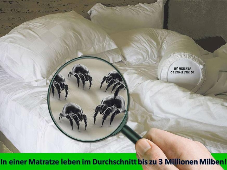 herbstmilben im bett insektenbisse im bett fl he wanzen milben insektenstich allergiker. Black Bedroom Furniture Sets. Home Design Ideas